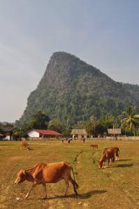 The School behind the Bulls