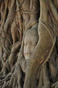 The Buddha Head in A Tree